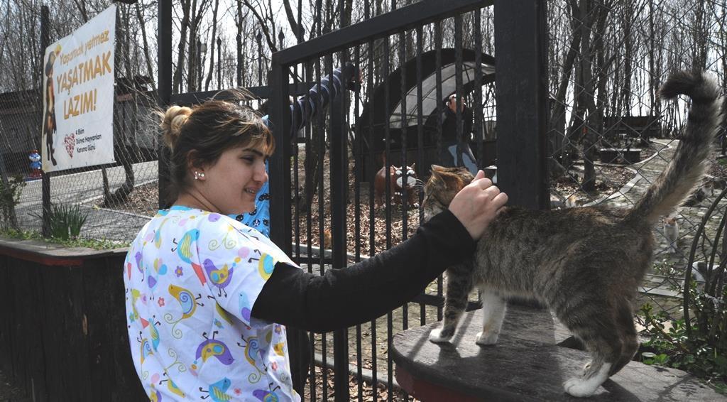 - samsun kedi kasabasi 1 - Mozart'ın Türk Marşıyla Kedilere Yemek Daveti