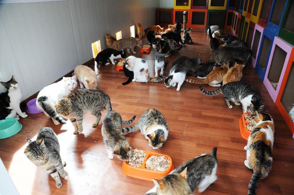 - samsun kedi kasabasi 10 - Mozart'ın Türk Marşıyla Kedilere Yemek Daveti