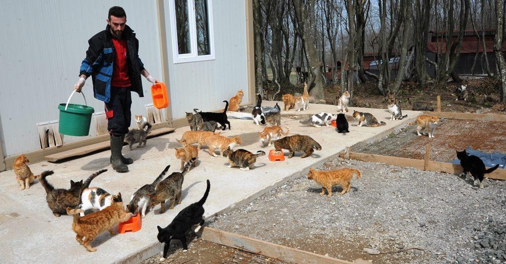 - samsun kedi kasabasi 12 - Mozart'ın Türk Marşıyla Kedilere Yemek Daveti