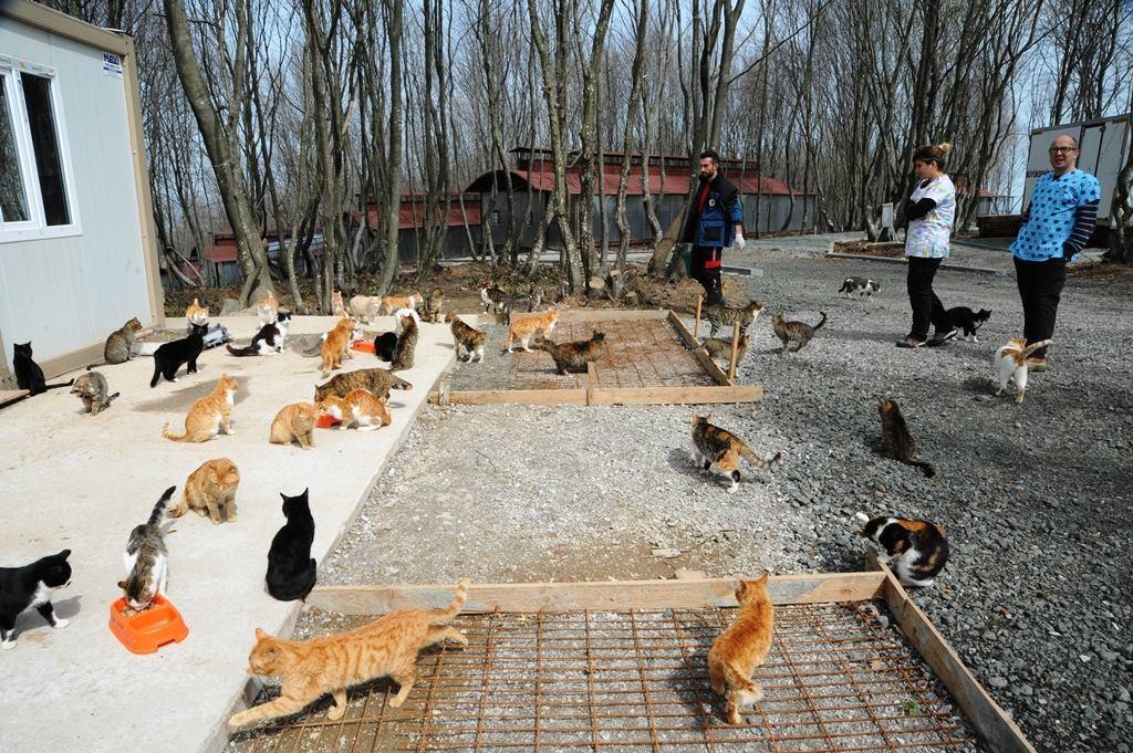 - samsun kedi kasabasi 13 - Mozart'ın Türk Marşıyla Kedilere Yemek Daveti