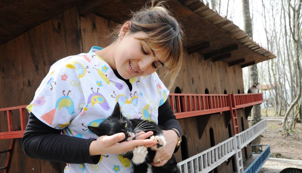 - samsun kedi kasabasi 14 - Mozart'ın Türk Marşıyla Kedilere Yemek Daveti
