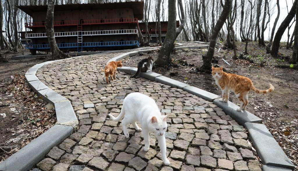- samsun kedi kasabasi 16 - Mozart'ın Türk Marşıyla Kedilere Yemek Daveti