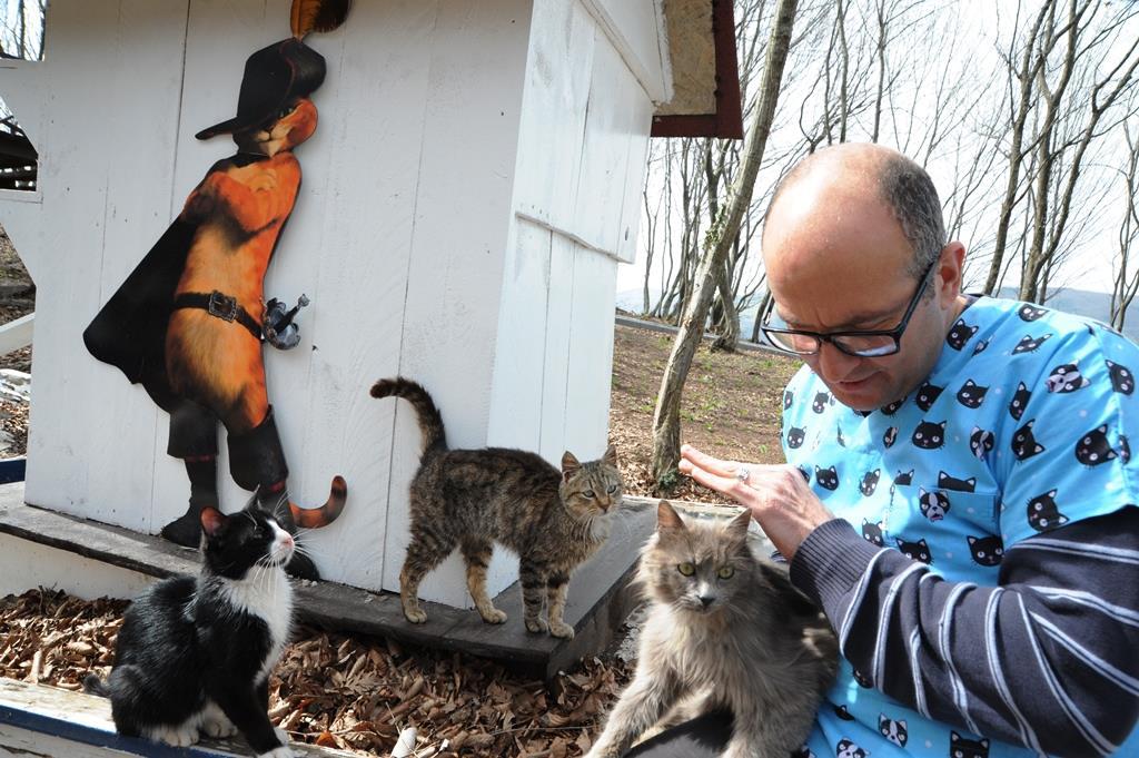 - samsun kedi kasabasi 18 - Mozart'ın Türk Marşıyla Kedilere Yemek Daveti
