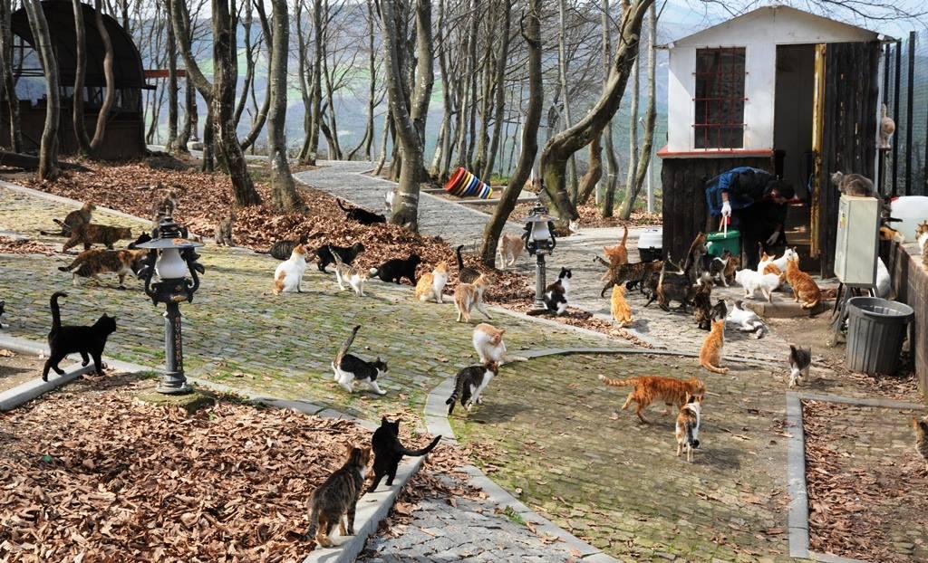 - samsun kedi kasabasi 5 - Mozart'ın Türk Marşıyla Kedilere Yemek Daveti