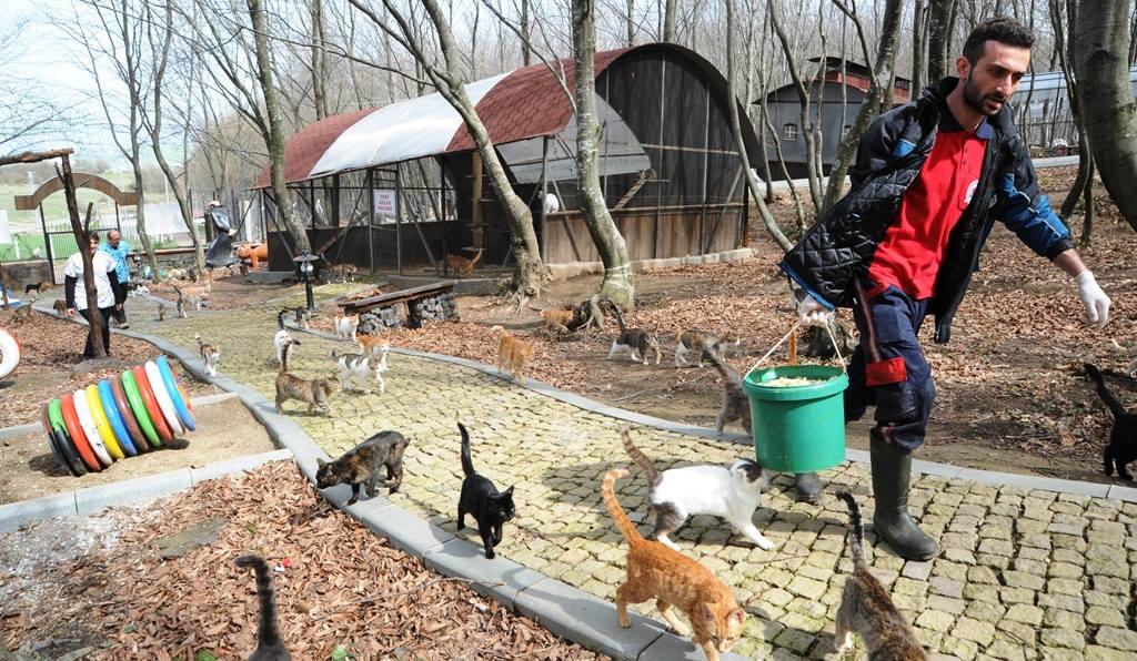 - samsun kedi kasabasi 6 - Mozart'ın Türk Marşıyla Kedilere Yemek Daveti