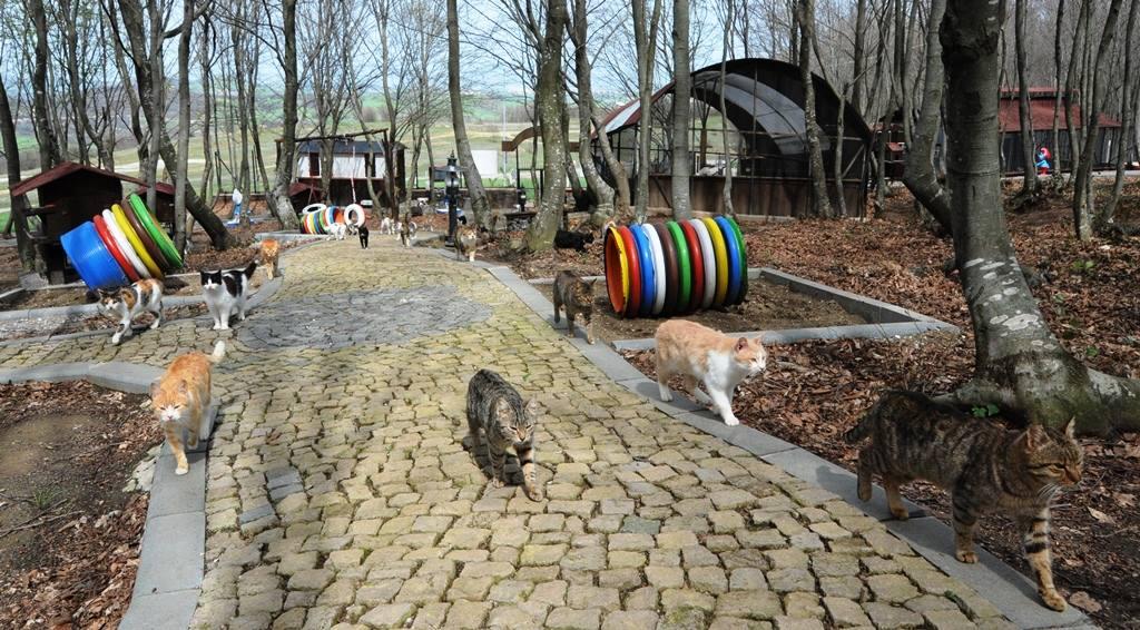 - samsun kedi kasabasi 7 - Mozart'ın Türk Marşıyla Kedilere Yemek Daveti