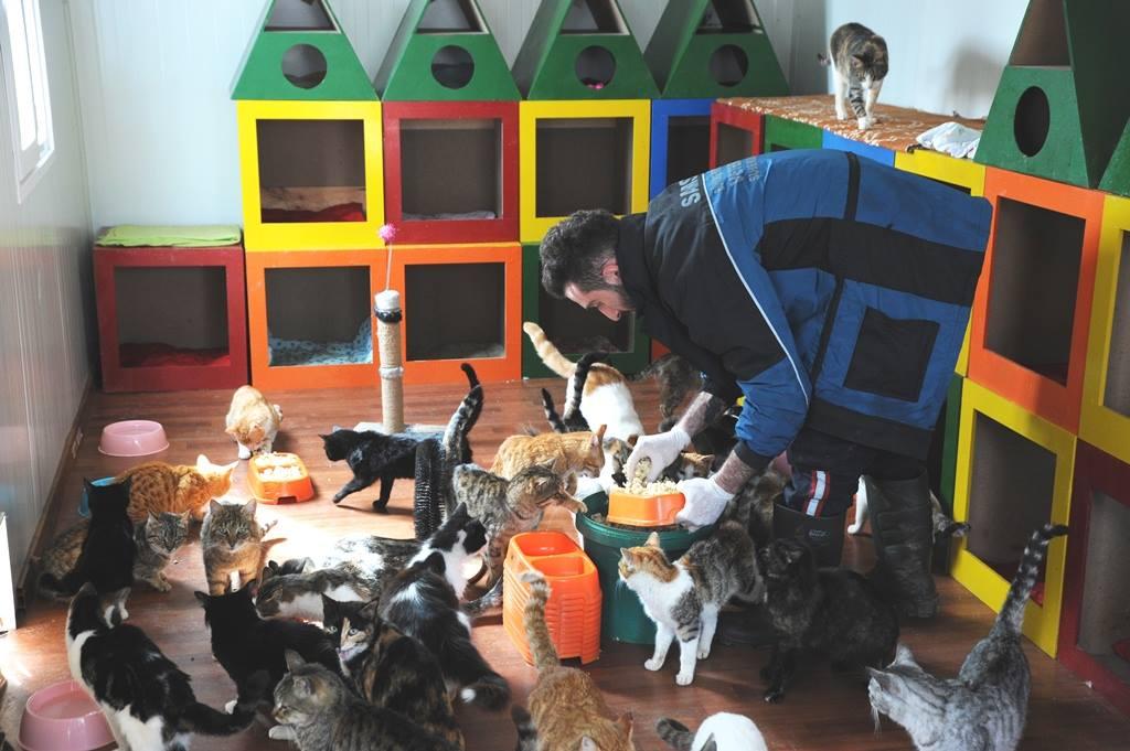 - samsun kedi kasabasi 8 - Mozart'ın Türk Marşıyla Kedilere Yemek Daveti