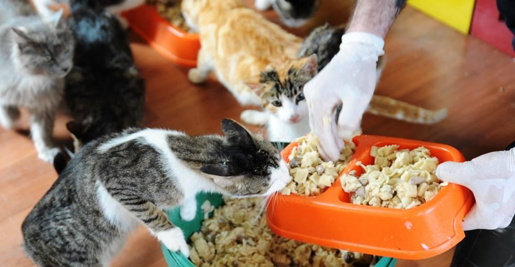 - samsun kedi kasabasi 9 - Mozart'ın Türk Marşıyla Kedilere Yemek Daveti