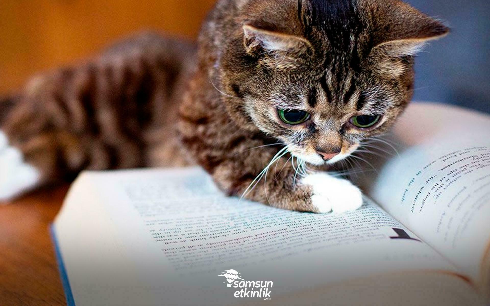 Kedilerden Esinlenerek Yazılan Kedi Kitapları!
